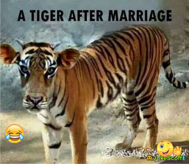 funny images husband tiger after marriage