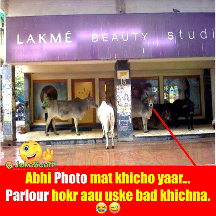 funny ladies parlour animal image