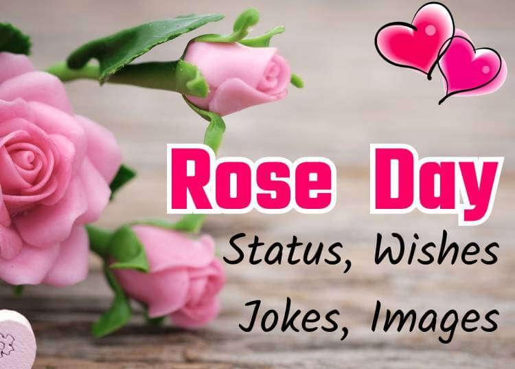 Rose Day Image